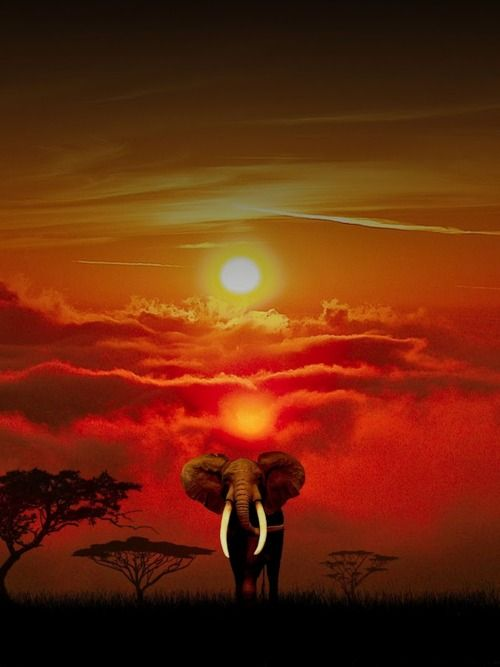 African beauty, sun glowing in clouds with single elephant standing on plain.
