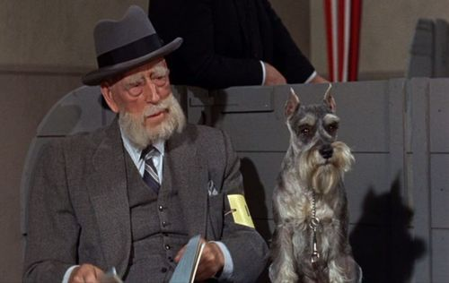 Figure 4 - A dog owner and his Schnauzer