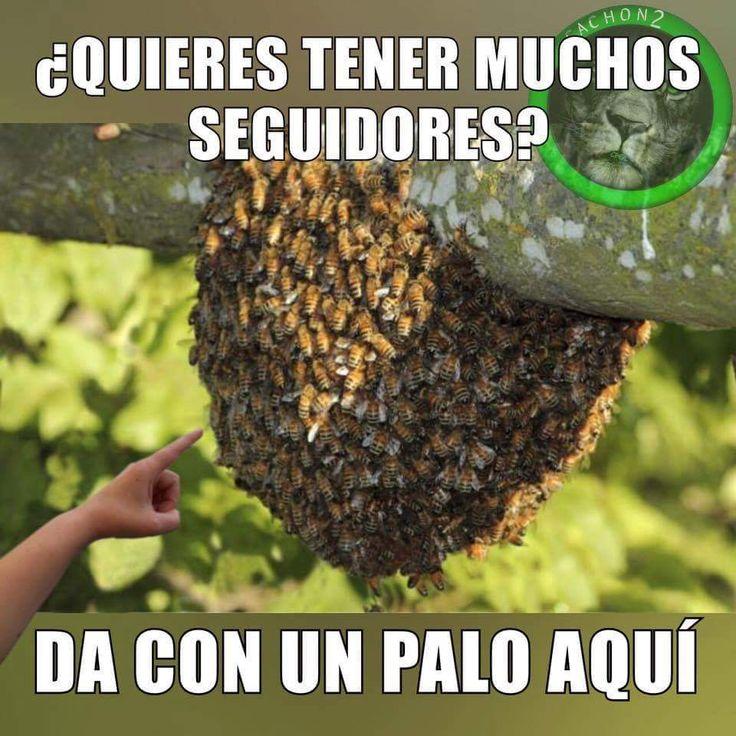 Fotos Divertidas Para Whatsapp#memes #chistes #chistesmalos #imagenesgraciosas #humor