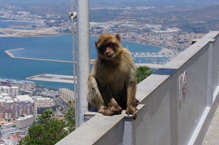 Os famosos macacos de Gibraltar - Viagem com Sabor