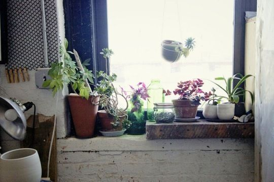 urban garden: Plants Can, Indoor Planti, Indoor Window Gardens, Green Thumb, Window Plants, Indoor Gardens, Urban Gardens, Inside Gardens