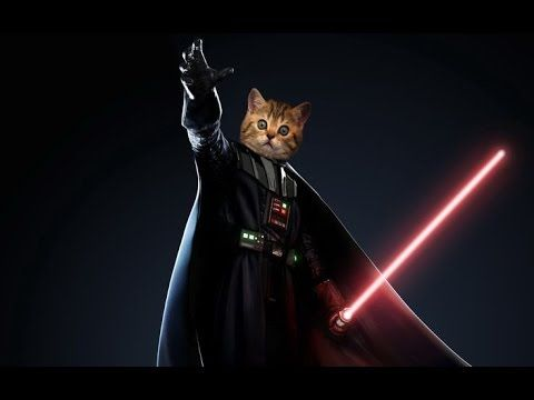 Rogue One: A Star Wars Story Trailer (Official Jedi Cats)