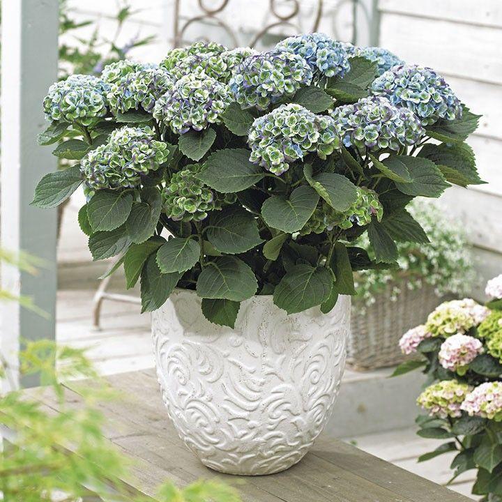 17 beste idee n over planten bij de voordeur op pinterest voordeur planters veranda - Deco kleine tuin buiten ...