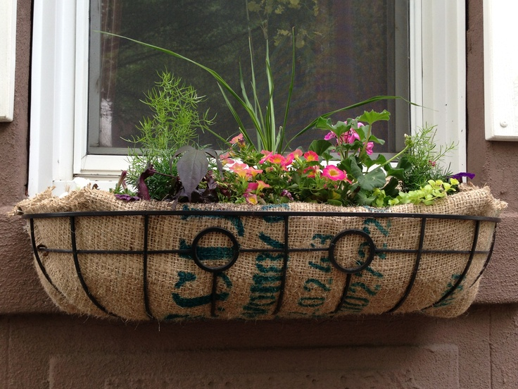 Why has no one seemed to catch on to using recycled coffee sacks as liners for window box planters?  I did this one yesterday for my neighbor.  Sacks were FREE from a local roaster!