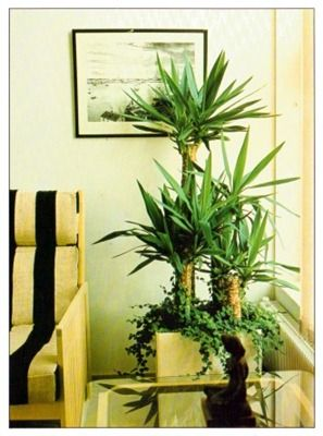 25 best ideas about tall indoor plants on pinterest plants for office large indoor plants - Tall office plants ...