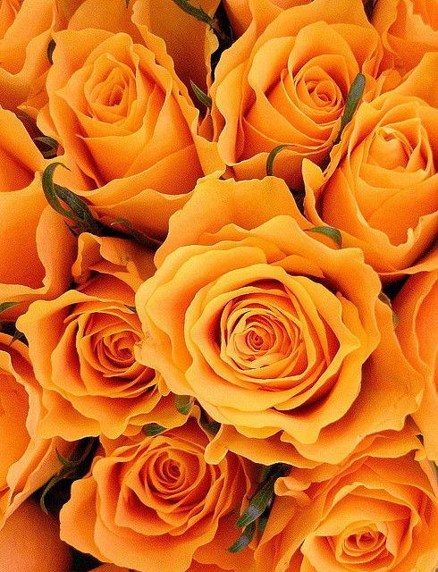 Frilly orange gathering roses