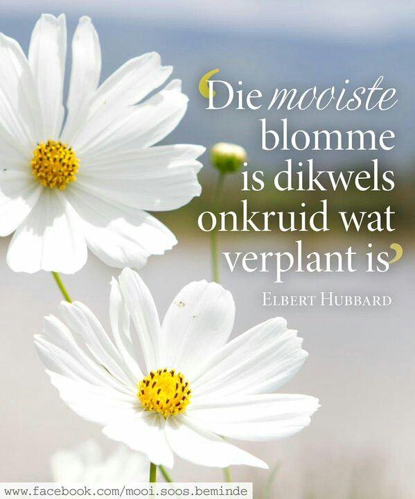 Die mooiste blomme is dikwels onkruid wat verplant is __ⓠ Elbert Hubbard #Afrikaans __@mooi.soos.beminde