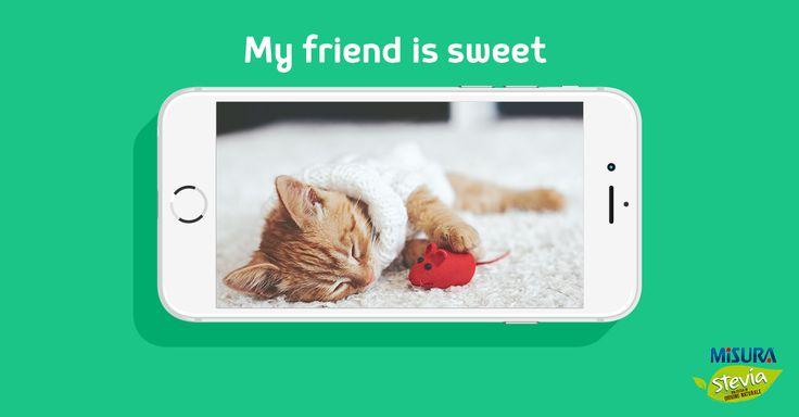 Momento relax del vostro micio? Scattategli una foto e caricatela sul sito per vincere i premi in palio con My friend is sweet  http://www.misurastevia.it/page/my-friend-is-sweet #cat #gattino #friends #animals #cats #pets