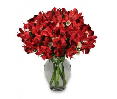 The bold color RED -- wonderful bouquet of red alstroemeria w white asters! #NashvilleFlorist #PerfectfortheHolidays http://www.uniqueflowerfashions.com/product/va08912/passionate-peruvian-lily