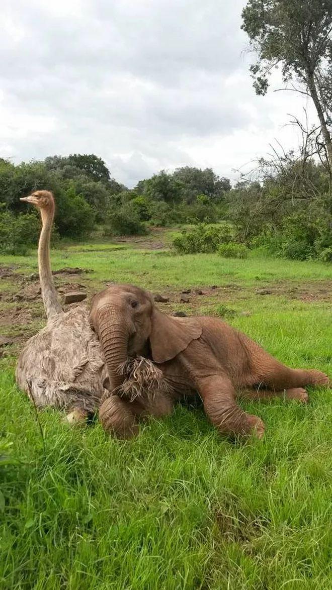 Friendship knows no boundaries especially in the animal kingdom.