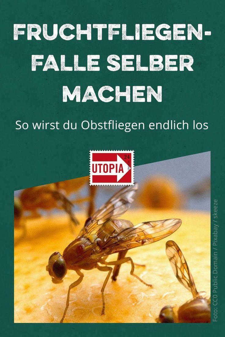 Fruchtfliegenfalle Selber Machen So Kannst Du Obstfliegen Loswerden Utopia De Fruchtfliegenfalle Obstfliegen Fruchtfliegen