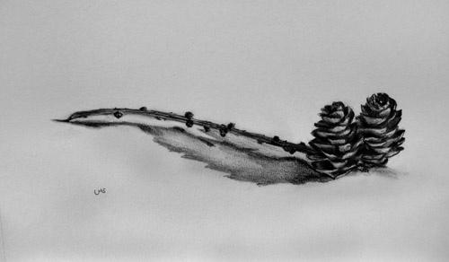 Scottish Larch Cones - Schottische Lärchenzapfen