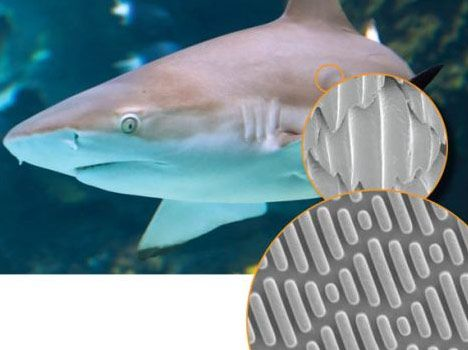 biomimicry-shark skin inspires microbial surface designs