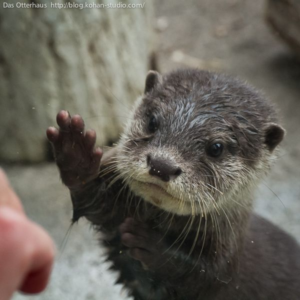 High five says this adorable otter!