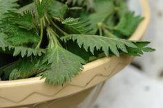 Wilde eetbare planten; recepten met brandnetel - Plazilla.com