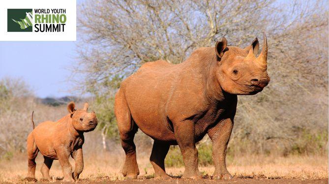 Keep your head up! :) #RhinoSummit2014 www.youthrhinosummit.com #rhino #wildlife #explore #nature