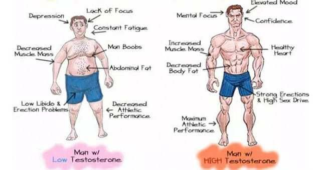 Low Testosterone levels and ways to increase it | Fit Topic