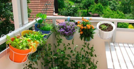 cultivo de ervas aromáticas na varanda de casa