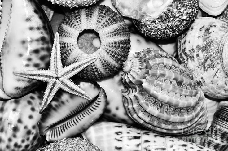 Shellscape In Monochrome Photograph  - Shellscape In Monochrome Fine Art Print