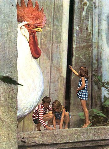 Pollo gigante #StreetArt