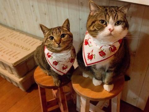 maru & hana. Of course, our dinner for Christmas is... 12/28, 5-1 via 私信