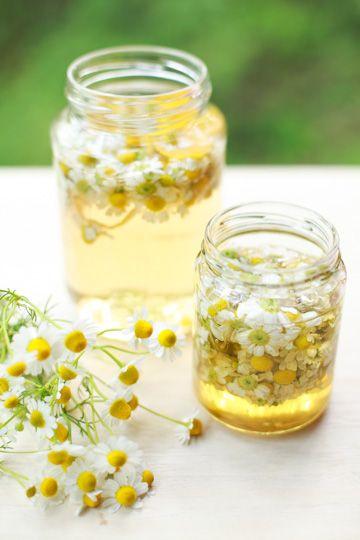Chamomile Flower Wine (Recipe: http://www.herbcompanion.com/cooking/chamomile-flower-wine.aspx) & Chamomile Infused Honey (Recipe: http://www.spain-in-iowa.com/2011/08/chamomile-infused-raw-honey/)