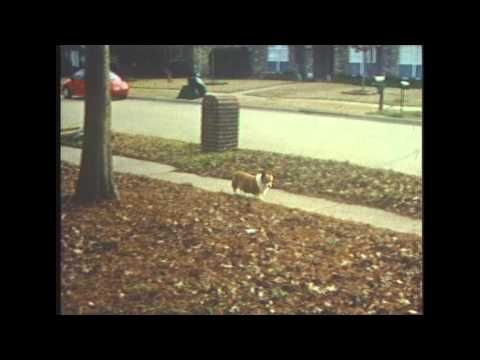 MY FIRST SUPER 8 FILM. CANON 814 ELECTRONIC - YouTube  *Modern Super 8 filming reference