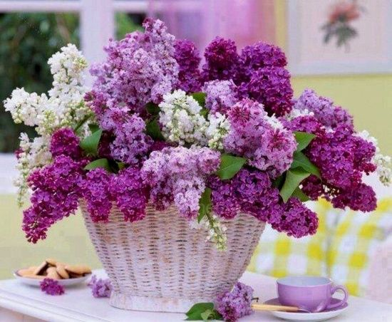 purple and white lilacs,,,