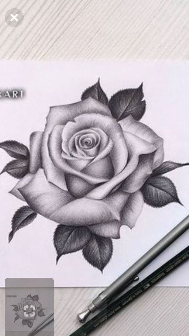 Pin By Debo Sabbah On Tattoo Perfect Realistic Rose Tattoo Rose Drawing Tattoo Roses Drawing