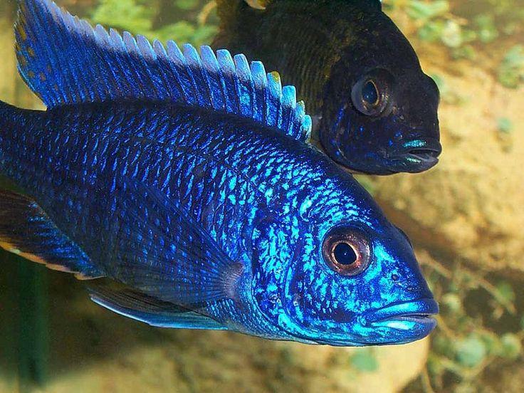 exotic fish beautiful tropical fishy pinterest