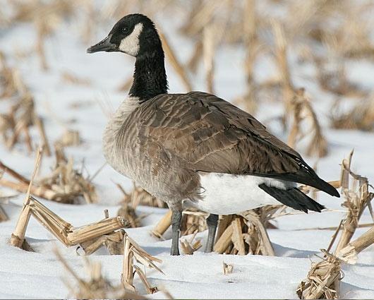 canada goose kensington parka online quiz rh learningrxonline com