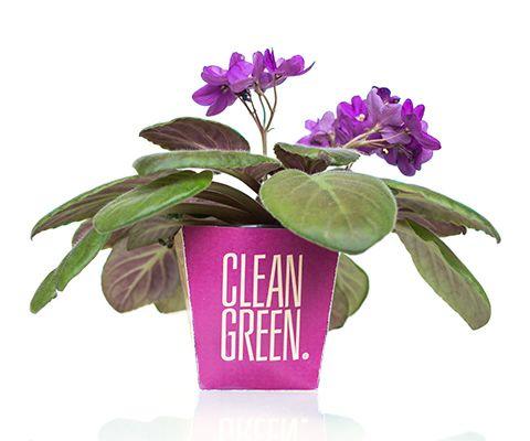 Clean Green Patricia Simas