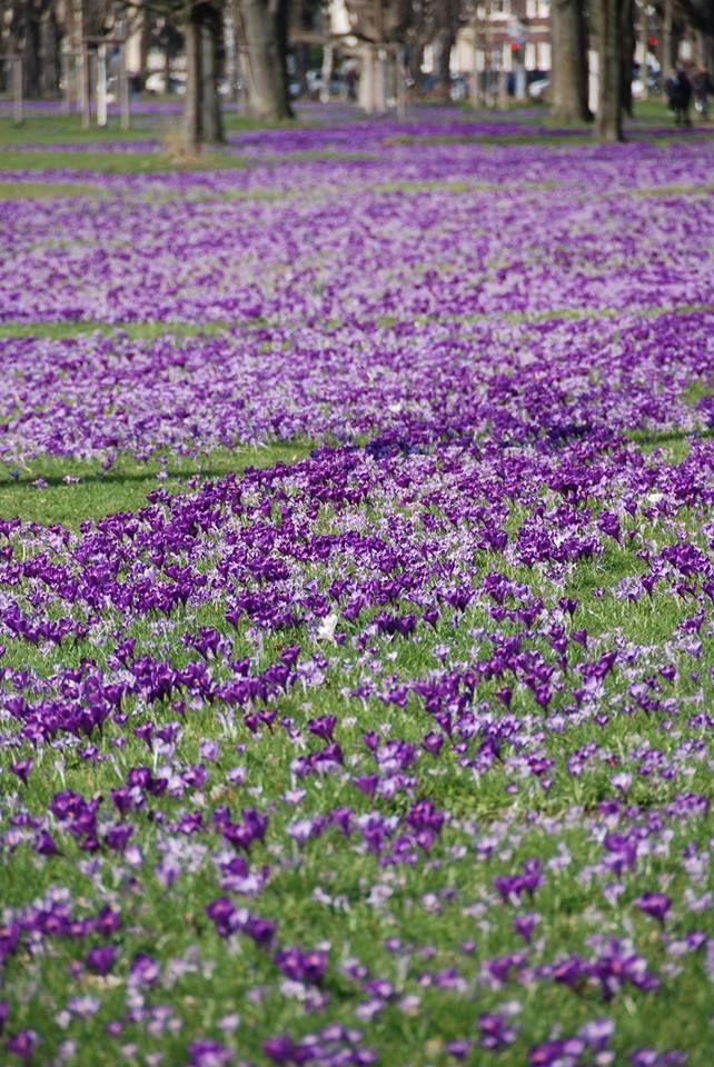 die besten 17 ideen zu lila himmel auf pinterest   lila, Hause ideen