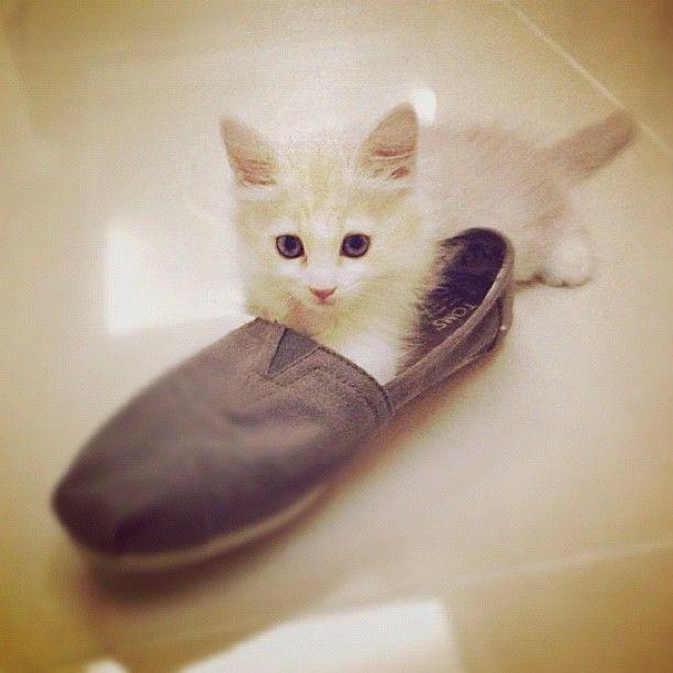 http://funnypetvideos.net  Cute Kitten Breeds | List of Cutest Types of Kittens - Ranker