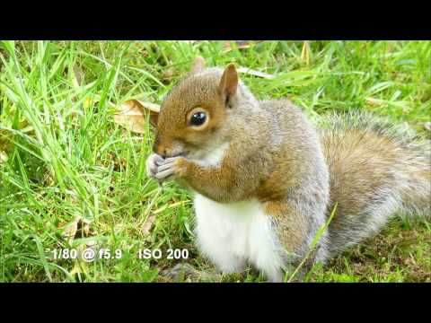 The Grey Squirrel, showcasing the Panasonic Lumix DMC-TZ20 (ZS10) camera - YouTube