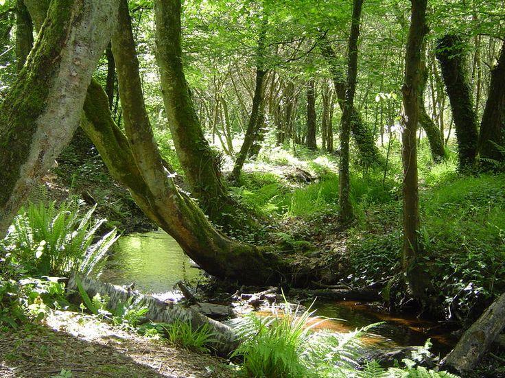 La beaut� des paysages du sud de la Bretagne - foret de broceliante