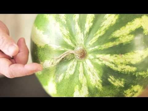 Как Выбрать Арбуз? — Выбираем спелый, вкусный и сладкий арбуз. — ЛайфХакКлаБ