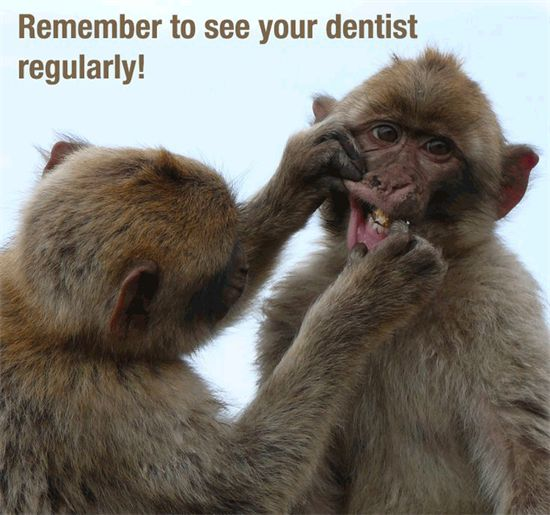 Dentaltown - Don't monkey around with your dental health! Remember to see your dentist regularly!