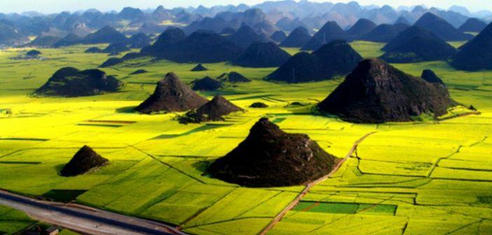 Beautiful Canola Fields of Luoping, China
