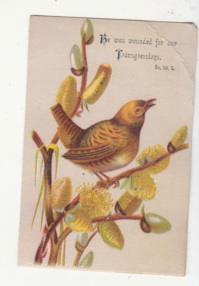 He Was Wounded for Our Transgressions Bird David C Cook Religious Card c1880s