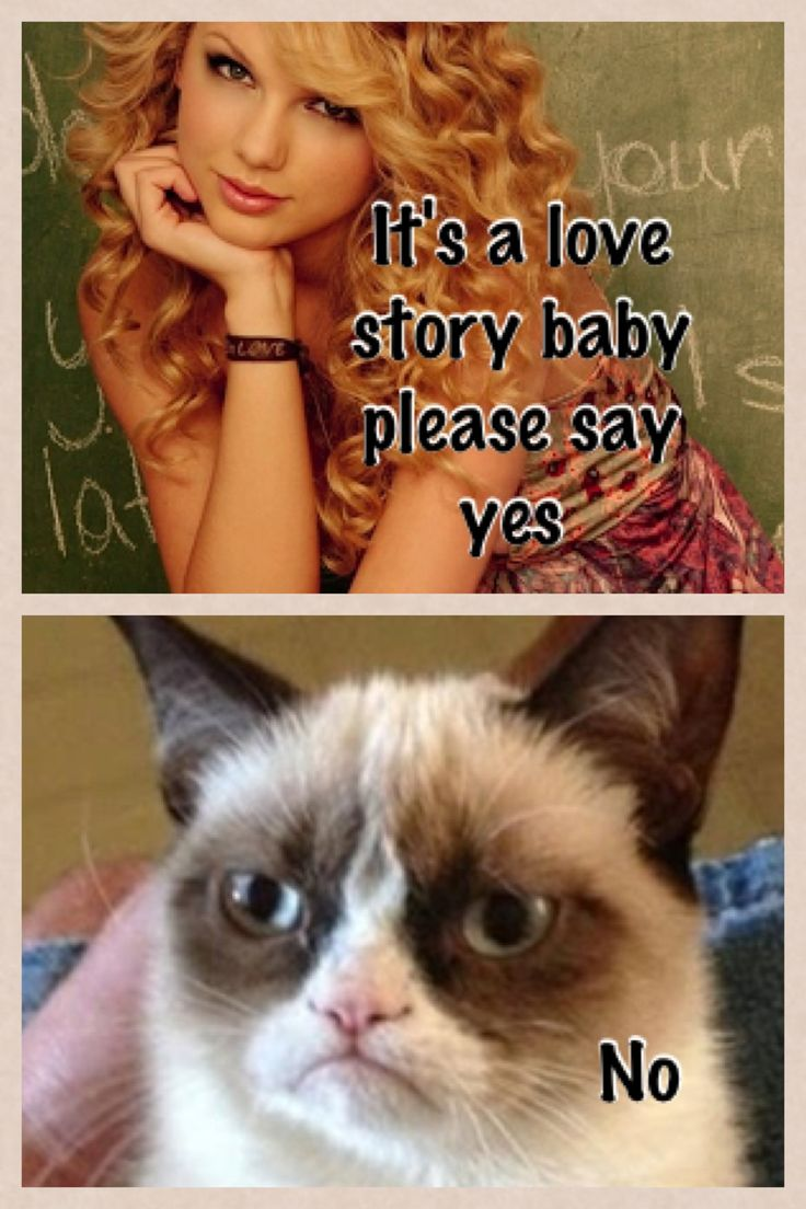 Taylor Swift Grumpy Cat Memes images  hdimagelibcom