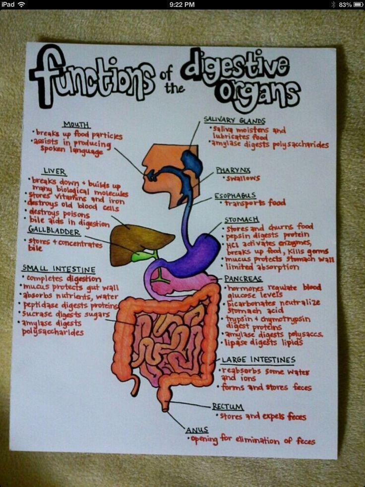 Bio digestive systems