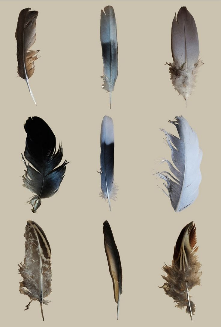 Feather Typology by Hannah Curson #Photography #Typology #Feathers