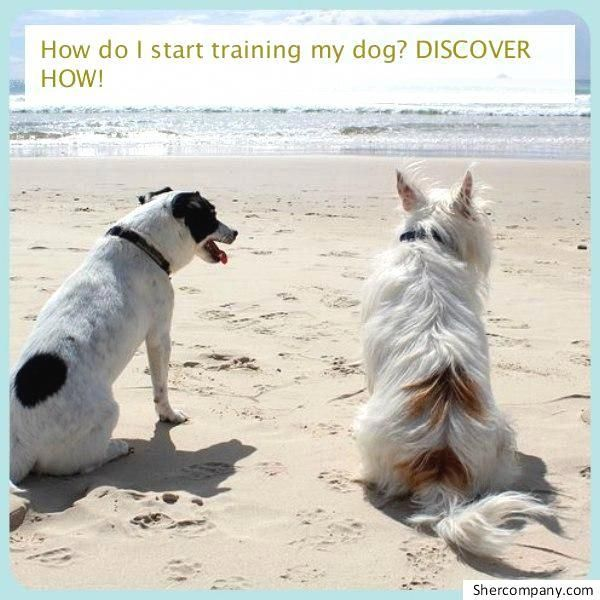 Strategies For Dog Training For Obedience You And Your Dog S Life