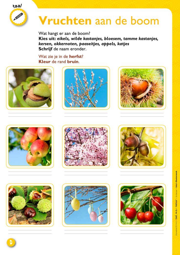 Vruchten aan de boom