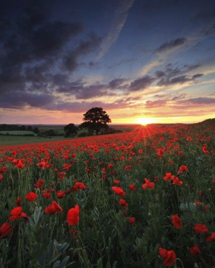 Renata Arpasova, Sunset Poppies. Finalist, Breathing Spaces, sponsored by the National Trust.