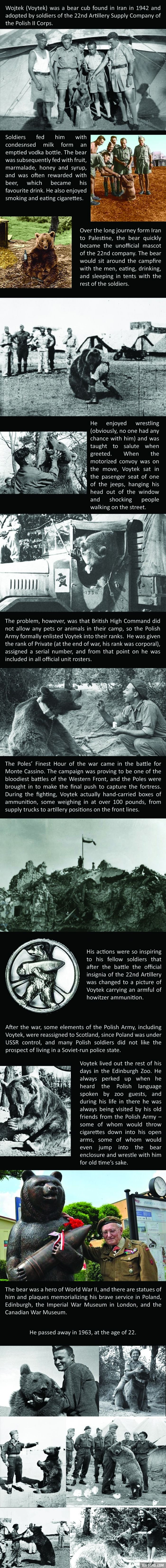 The amazing story of Voytek the Soldier Bear. https://en.wikipedia.org/wiki/Wojtek_(bear)