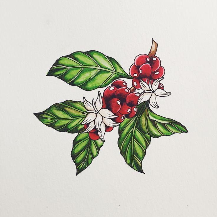 JIEMIN LIN — Coffee Bean Plant // Watercolour                                                                                                                                                                                 Más