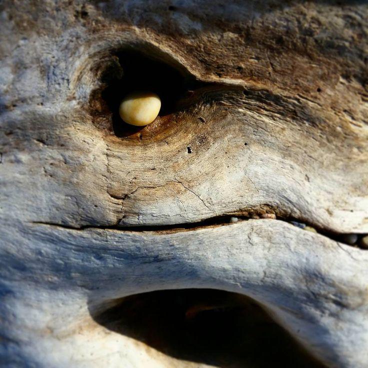 Isn't nature funny?  #driftwood #lifelike #reptile #eyesocket #nature #beach #pebble #northfork #bluff #beachcomber #longisland #sound