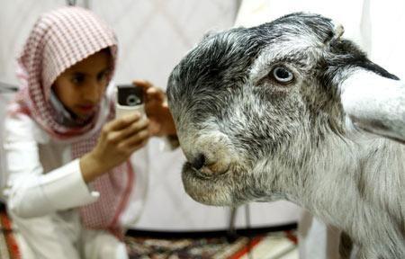 The Damascus Goat Looks Really Strange Lazer Horse